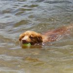 A True Water Dog!